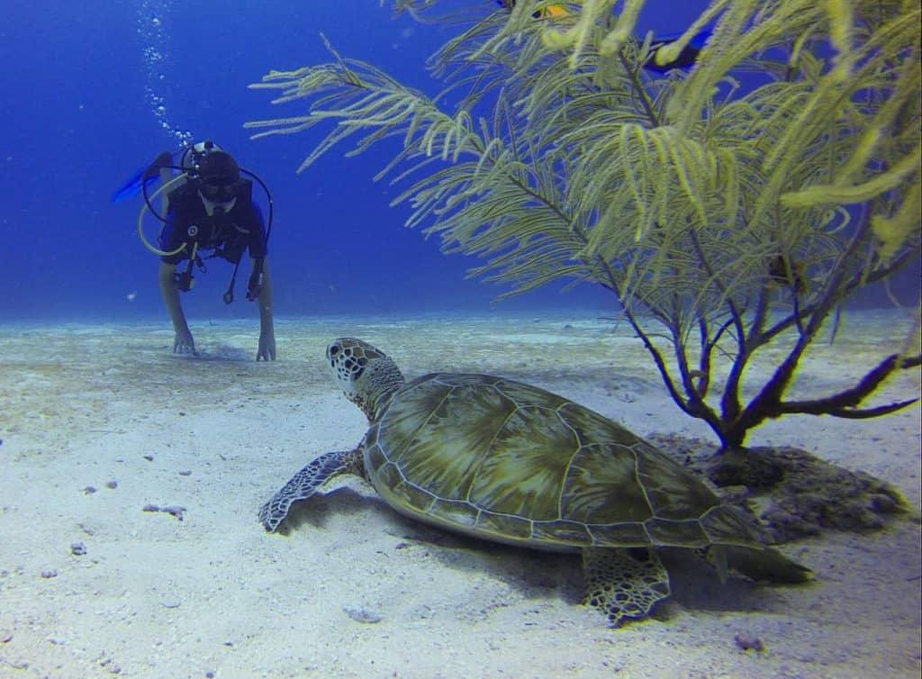 Diver spots a turtle in Cozumel Mexico - stingray villa
